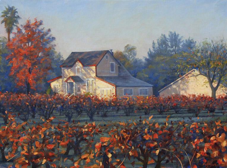 vineyard-morning