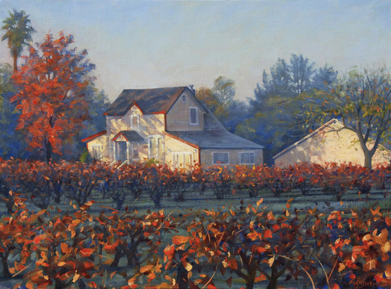 vineyard-morning